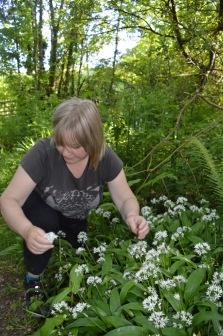 Picking wild garlic