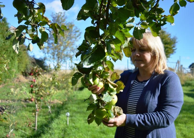 summer-picking-apples