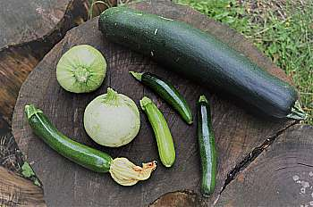 CAMPERVAN RECIPE: What Can I Do With All These Bloomin' Courgettes…?
